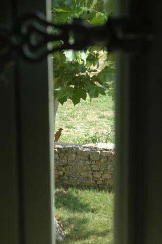 oiseau vue volet chambre